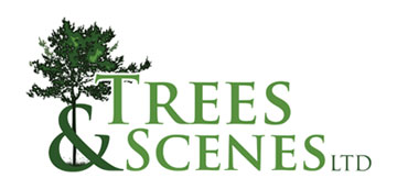 Trees and Scenes Ltd